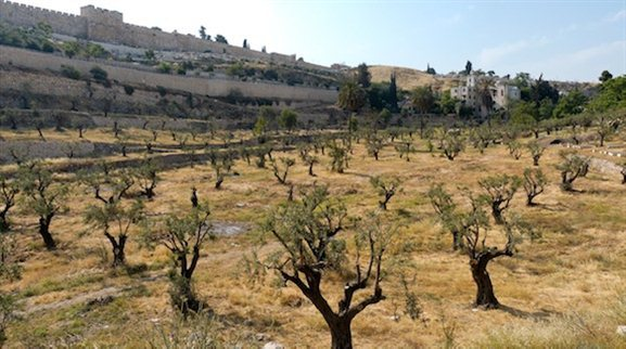 idron Valley from south with olive trees tb051906431 The Kidron Valley— Your Burial Can Point to Your Faith